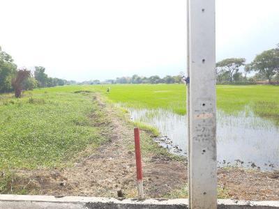 ที่ดิน 10000 กรุงเทพมหานคร เขตลาดกระบัง ลำปลาทิว
